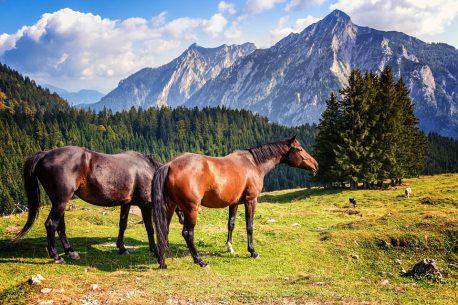 Canada a cavallo