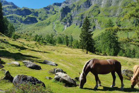 Albania: tour a cavallo sulle tracce dell'antica Zagoria