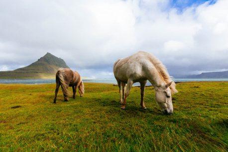 Trekking a cavallo tra i ghiacciai dell'Islanda