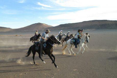 Il cavallo perfetto per l'endurance