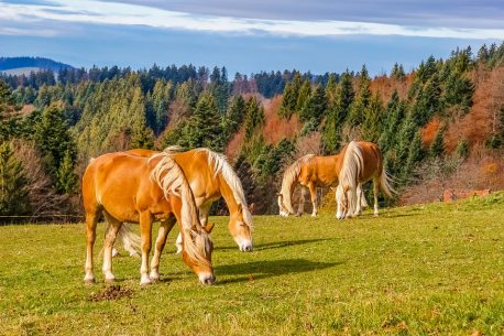 passeggiate a cavallo nella Foresta Nera