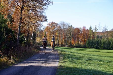 Il cammino di Santiago de Compostela a cavallo