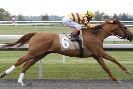 cavallo più veloce del mondo