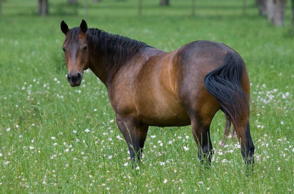 10 curiosities about horses
