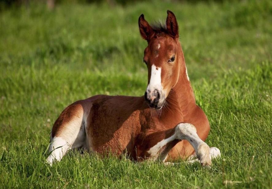 Go Horse è Vero Che I Cavalli Dormono In Piedi Go Horse