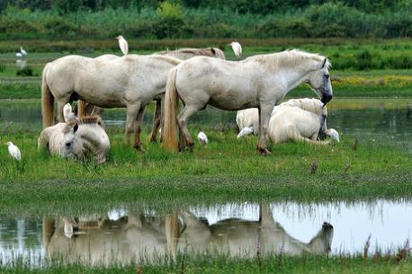 i cavalli dormono in piedi