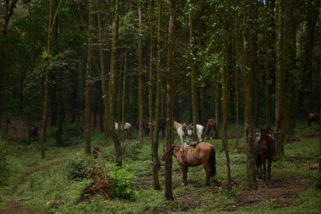 A cavallo nelle giungla dei Maya