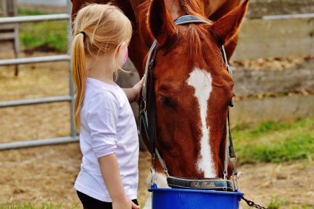 cavalli e bambini