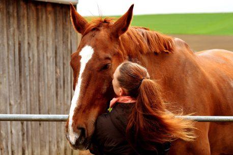 il cavallo più vecchio del mondo