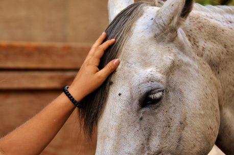 addestramento etologico cavalli