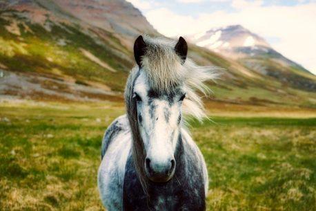 Vacanza a cavallo in Islanda