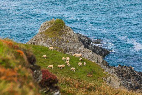 Alla Scoperta della contea di Donegal