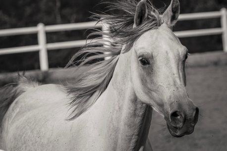 Viaggio a cavallo in Portogallo