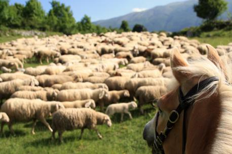 vacanze a cavallo in Abruzzo