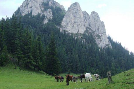 A cavallo per la Transilvania