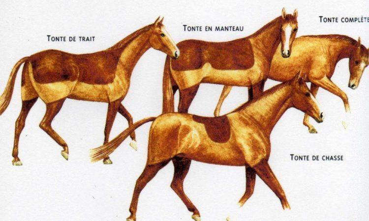 la coda di cavallo perde pesona