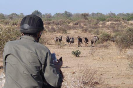 Trekking a cavallo in Sudafrica e Botswana