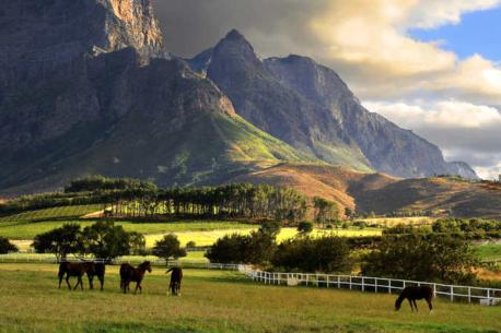 Western Cape: la regione delle Wineries