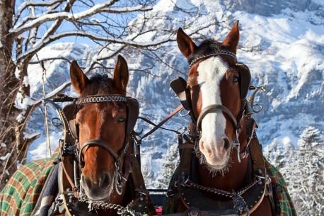 slitta trainata da cavalli
