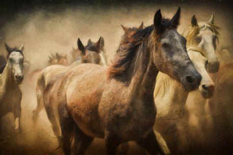Leonardo Da Vinci e il cavallo