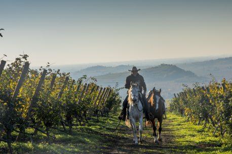 Veneto trekking a cavallo