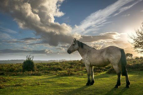 Viaggio a cavallo in Colombia nella riserva di Orinoquia