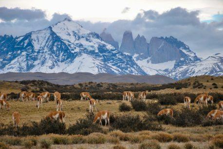 Trekking della Patagonia a cavallo