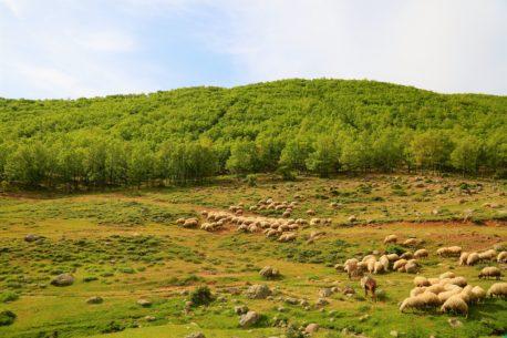 Viaggio a cavallo in Anatolia : mare e monti di Antalya