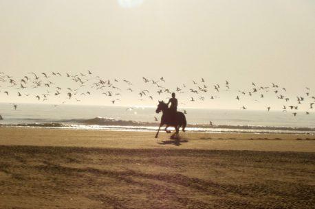 Vacanza a cavallo in Marocco a Essauira