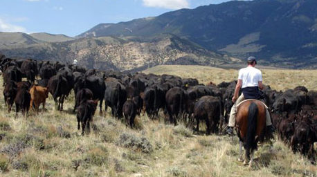 Viaggio a cavallo in Montana sulle tracce di Nicholas Evans