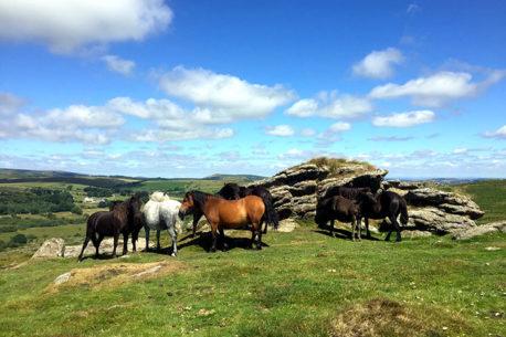 Viaggio a cavallo in Inghilterra nel Parco Nazionale di Dartmoor