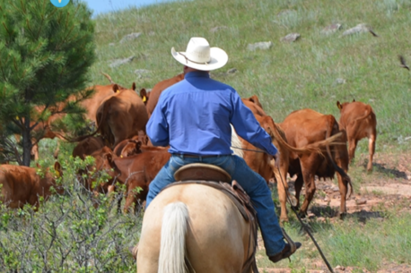 soggiorno equestre in ranch in Wyoming