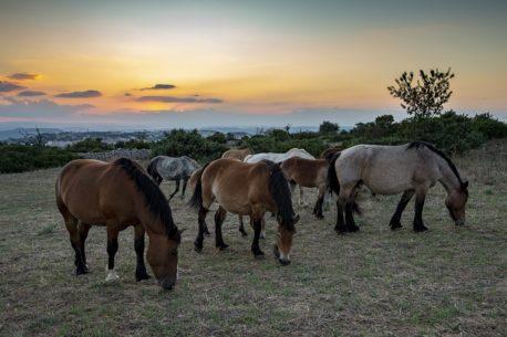 Vacanze a cavallo in Basilicata
