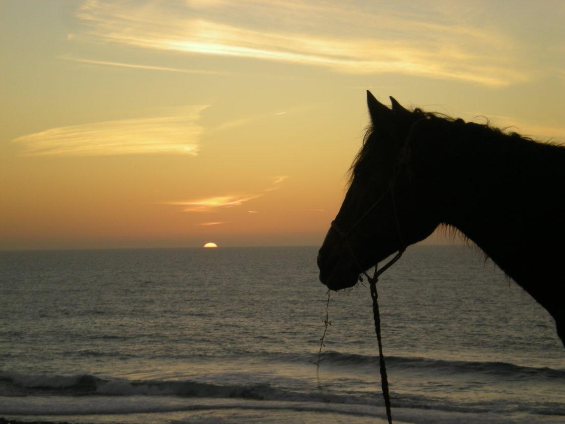 passeggiate a cavallo Agadir