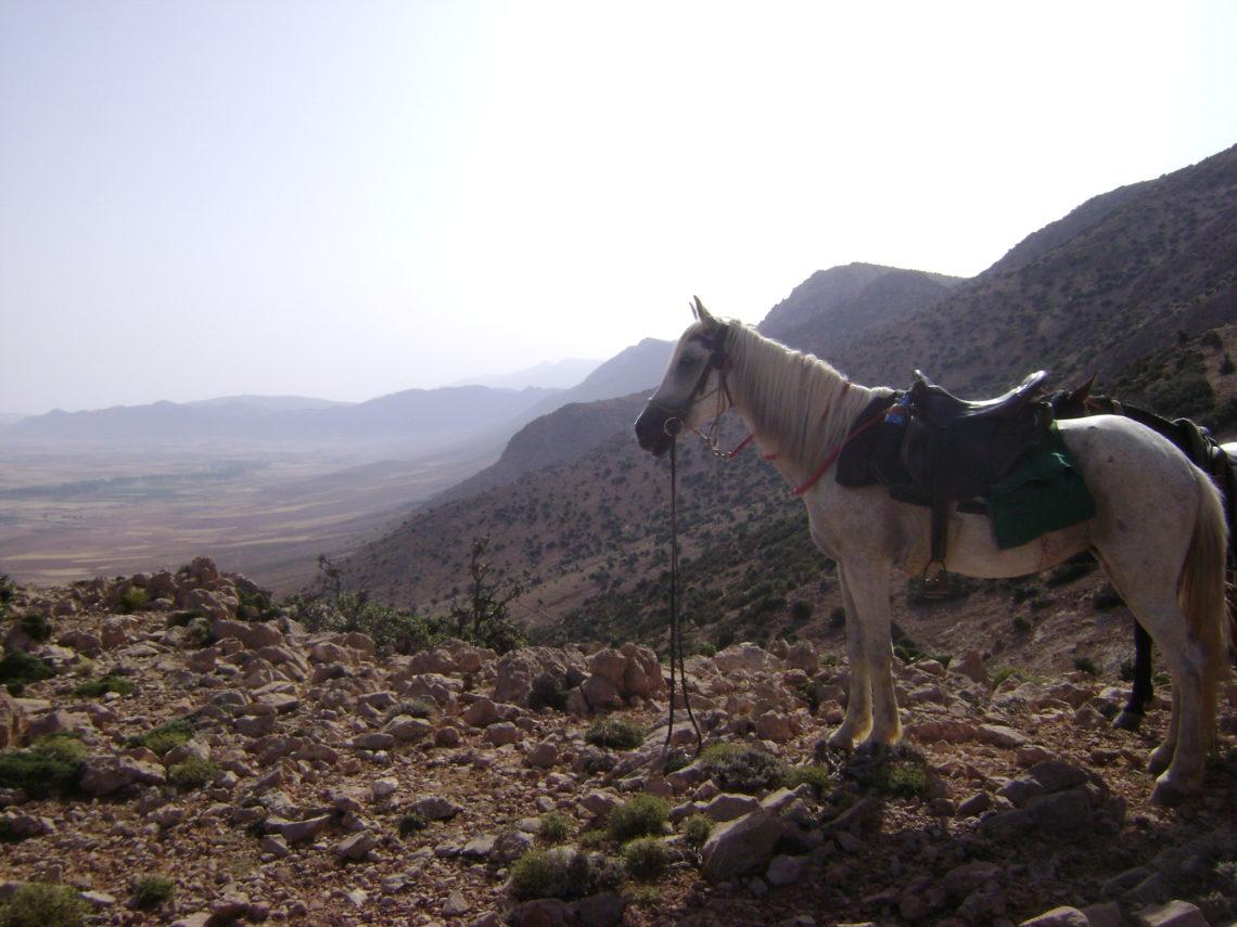 Marocco a cavallo