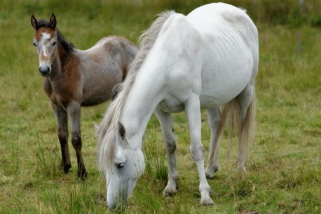 vacanza a cavallo in irlanda
