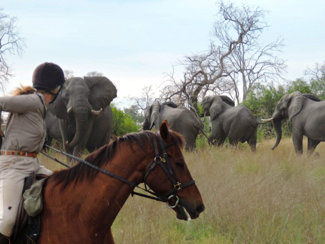 Safari a cavallo delta okavango